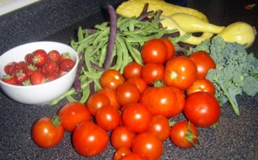August morning harvest