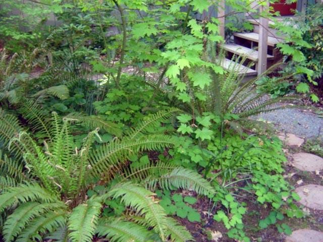 Garden of Oregon natives