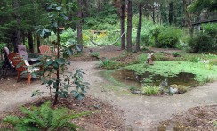 New frog/azolla pond with hammock and sitting area