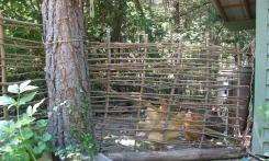 Hazelnut wattle gate