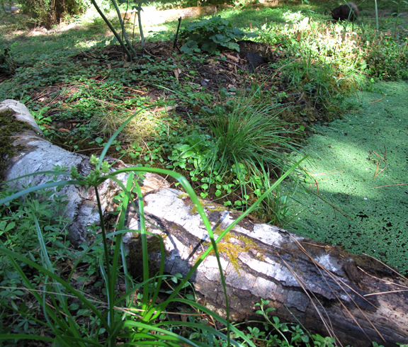 Moss, grass and log on edge of pond