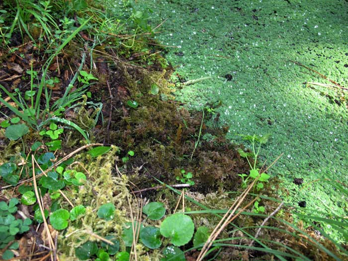 Mossy Pond edge