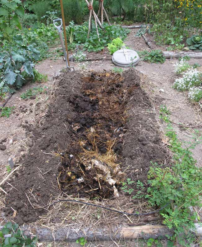 Partially finished compost in trench ready to cover with soil