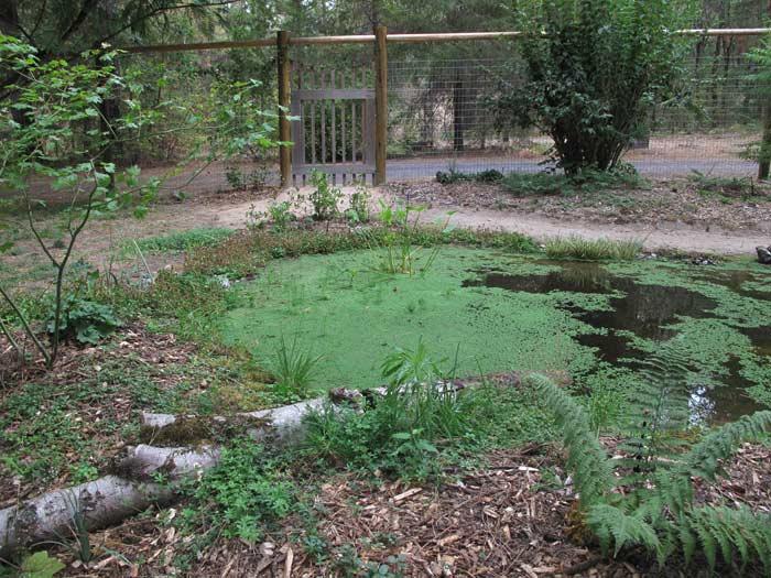 Pond progression