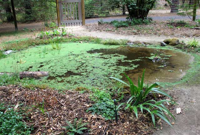 Pond and surrounding planting four months later