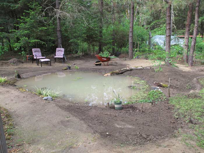 Pond filled and planting begun around edges