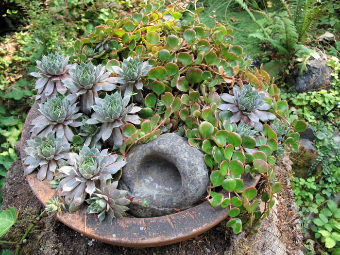 Sedums in a bowl on a stump