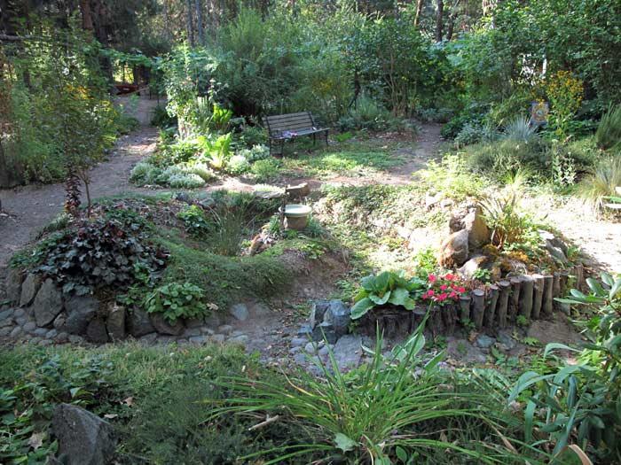 Rain garden one year later!