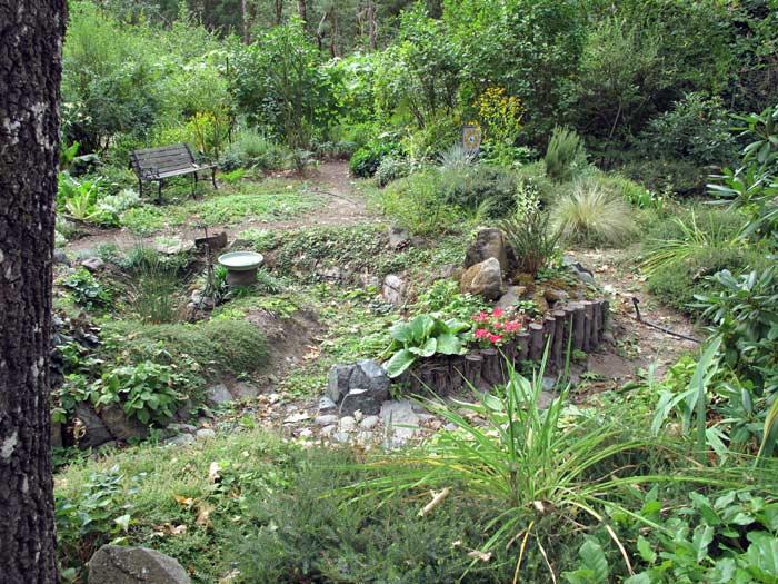 Rain garden, Zen garden and bench