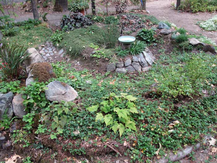 Rain garden viewed from the west side