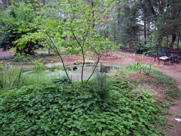 Native Plants Around Pond
