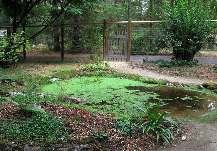 Backyard Frog Pond the frog pond – second year… – the holistic garden