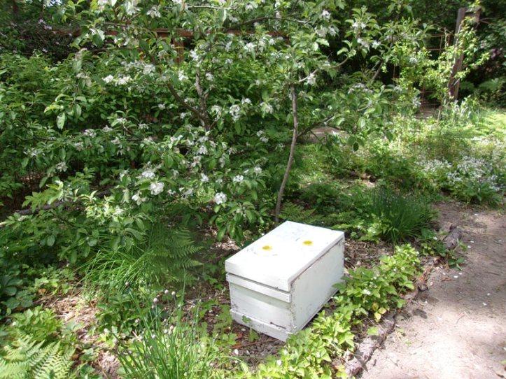 BeehiveUnderHoneycrisp
